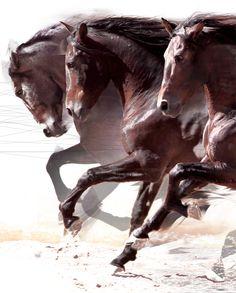 Andaluz by Emilio Garcia Salazar, via Behance