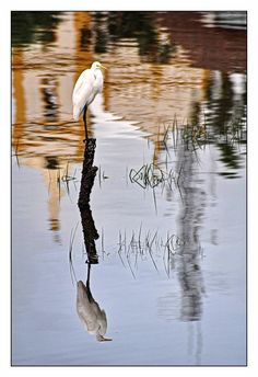Foto Bird, Animals, Pictures, Animales, Animaux, Birds, Animal, Animais