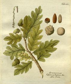 1804 - Icones plantarum medico-oeconomico-technologicarum cum earum fructus ususque descriptione = - Biodiversity Heritage Library