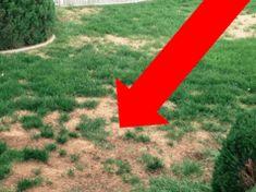 Krásný trávník za pár dní: Profesionální zahradník ukázal jednoduchý trik, jak zakrýt suchá místa a urychlit růst trávy!