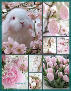 Spring / Easter in pink by Reyhan Seran Dursun - Ostern