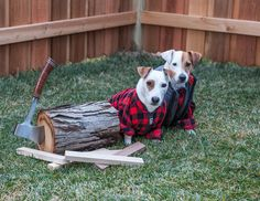 Show your support for Georgia Jack Russell Rescue, Adoption & Sanctuary by…