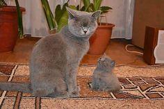 Mother & Child Cat