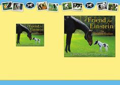 A Friend for Einstein, the Smallest Stallion discussion guide  * Different * small * sizes * strong * Horse * farm Einstein had to look outside his world of horses to find the perfect playmate. Featuring full-color photographs of the spirited little stallion and a series of adorable creatures, this inspiring story about finding a true friend will bring joy to nature lovers of all ages.