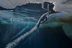 Una docena de fotografías premiadas en World Press Photo 2013 - una docena de