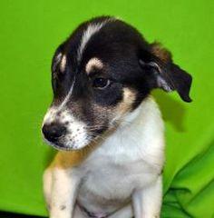 Sosa has been adopted!