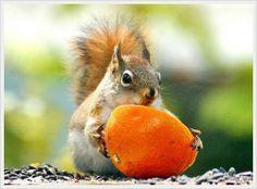 Wild Animals Photo: Cute Squirrels