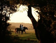 Silhouette tree framed image couple horse back riding.