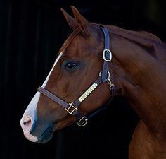 Horse Sense: 12 Tricks for Better Equine Photography