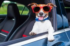 Many dogs are known to love car rides. What's not to love about it (unless the destination is a veterinarian's office)? A car ride means you're getting to go somewhere instead of being left all alone at home.