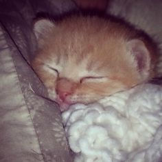 We love AWLQ because it gives us the opportunity to #love and #care for those who are too little to speak loudly... #ilovebecause #fostering #fostercarers #lotsoflove #cuteasabutton #thisisEva #kitten #baby #soyoung #allruggedup #cutie #adopt