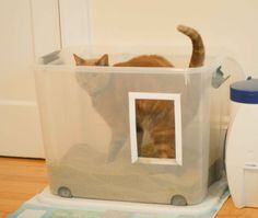 Target+Cat+Litter+Box | What to Do When Your Cat Is Not Using the Litter Box