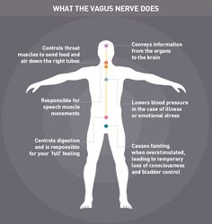 Unlock the Power of the Vagus Nerve to Reduce Chronic Stress fibromyalgia pain Relief Chronischer Stress, Emotional Stress, Chronic Stress, Fibromyalgia Pain, Ayurveda, Stress Control, Hernia, Natural Blood Pressure, Craniosacral Therapy