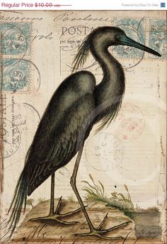 Antique Bird Collage Print   5 x 7  Blue Heron by 1001treasures