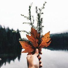 Fall maple leaves at the lake http://www.maddinka.com/