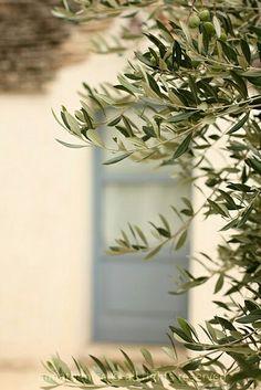 Olive #italy #tree www.varaldocosmetica.it