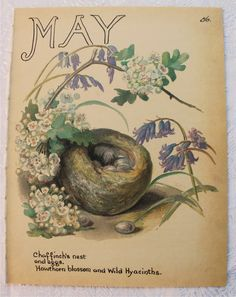 Vintage Botanical Book Plate - May - Hawthorn - Country Diary of an Edwardian Lady - Edith Holden