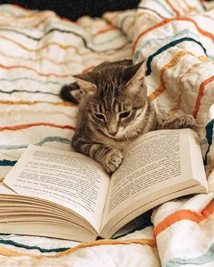 I Love Cats, Crazy Cats, Cool Cats, Cute Kittens, Cats And Kittens, Ragdoll Kittens, Bengal Cats, Kitty Cats, Cat Reading