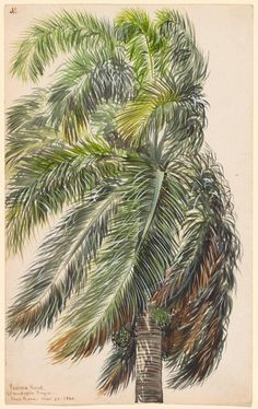 The Gallery is closed today due to inclement weather. (In the meantime, enjoy this palm by Charles de Wolf Brownell.)