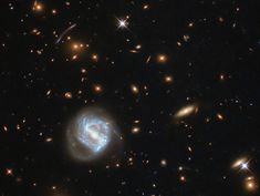 Hubble's Galaxy Cluster Cornucopia : The swirling spiral to the lower left of the frame is far from the most interesting spectacle here — behind it sits a galaxy cluster. (via NASA) Nasa Pictures, Astronomy Pictures, Nasa Photos, Nasa Images, Cosmos, Carina Nebula, Helix Nebula, Whirlpool Galaxy, Hubble Space Telescope