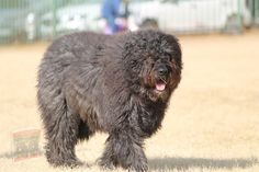 Dog Grooming Clippers, Pet Grooming, Rottweiler, Low Shedding Dogs, Labrador Retriever, Black Russian Terrier, Farm Dogs, Bear Photos, Best Dog Training