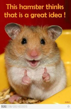 Easy Science for Kids All About Hamsters - Cute Little Animals. Learn more about Hamsters with our Online Science Facts for Kids on Hamsters! Cute Little Animals, Cute Funny Animals, Funny Animal Pictures, Funny Cute, Cute Pictures, Hilarious, So Cute, Funniest Animals, Funny Happy