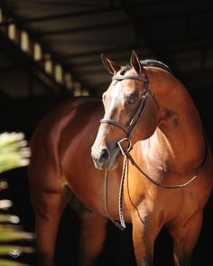 """A lovely horse is always an experience. It is an emotional experience of the kind that is spoiled by words.""  Beryl Markham"