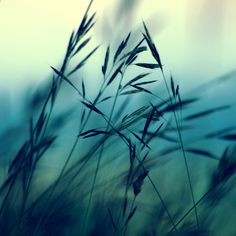 the wind #photography