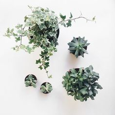 Urban Jungle Bloggers - a 'plant gang'   These Four Walls blog