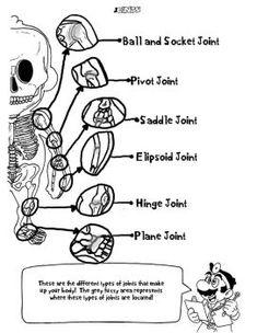 Doctor Marios Anatomy Coloring Book Page 5 By AmbrosiaNBurbank