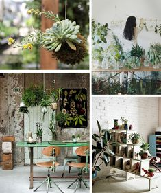 Unique ideas for how to incorporate houseplants into your decor