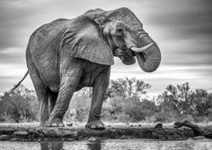 Standing Proud by Jaco Marx