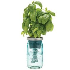 """Self-Watering Herb Kit with Organic Seeds Black thumbs be gone. Our self-watering herb kit that features a blue vintage-inspired mason jar outfitted with a passive hydroponic system known as """"wicking, Mason Jar Herbs, Mason Jar Planter, Pot Mason, Mason Jar Diy, Diy Self Watering Planter, Pots, Colored Mason Jars, Herb Planters, Planter Ideas"""