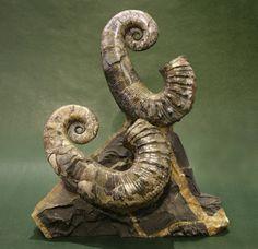 Fósiles - Minerales Natura SL