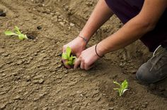 Replanting America: 90 Percent of What We Eat Could Come From Local Farms | TakePart