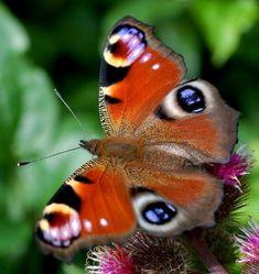 Las Mariposas más bellas del mundo