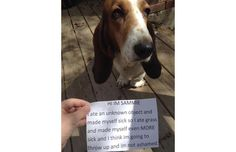 29 Hilarious Photos Of Dogs Being Shamed For Their (Adorable) Crimes (Slide #64) - Pawsome