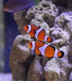 Aquarium and Tropical Fish Tank Tips, Tricks, Podcast, Resources, and Information