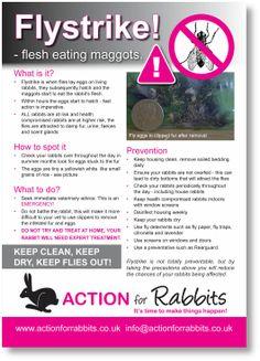 Flystrike in Rabbits, Rabbit Health, rabbit help, rabbit poster