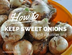 How to keep sweet onions fresh all summer long - There is nothing like the taste of sweet spring onions in early June and clear into September. http://oursimplelife-sc.com