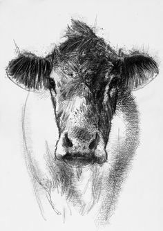 How now brown cow, Artist Sean Briggs producing a sketch a day, prints available at https://www.etsy.com/uk/shop/SketchyLife  #art #cow #drawing #http://etsy.me/1rARc0J