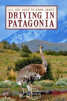 Driving in Patagonia (Argentina and Chile) Guide to driving in Patagonia. Tips for driving (includi Patagonia Travel, In Patagonia, Packing List For Travel, Travel Tips, Travel Advise, Trinidad Carnival, 17th Century Art, Argentina Travel, South America Travel