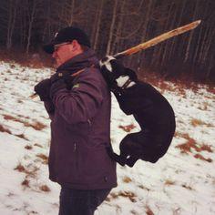 Boston Terrier funny!