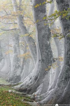 """Ancient Forest, Abruzzo, Italy...reminds me of Dante's Inferno: """"Midway upon the journey of our life, I found myself within a forest dark, for the straightforward path had been lost."""" Canto 1"""