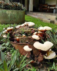 Tree stump with wild  #tree #stump #treestump #sv #ugm #thv #mushroom #wildmushroom #plants