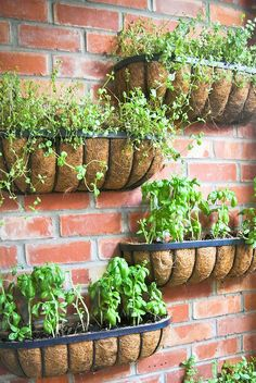 Interior Design in Auckland - vintage shops furniture accessory retro finds design new zealand plants urban green wall idea DIY