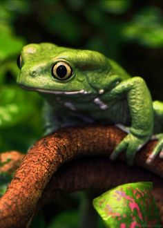 Toads And Frogs Decline In British Gardens