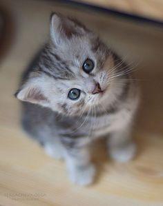 kitty cat 3 Daily Awww: Kitty cat cuteness (22 photos)
