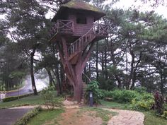 The Coolest Tree house i have ever seen in the Philippines!