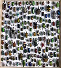 Awesome Beetle collection by Serrator, via Flickr